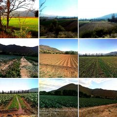 Curacavi venta terreno agricola alhue 890